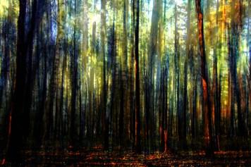 Landscape Autumn Colors