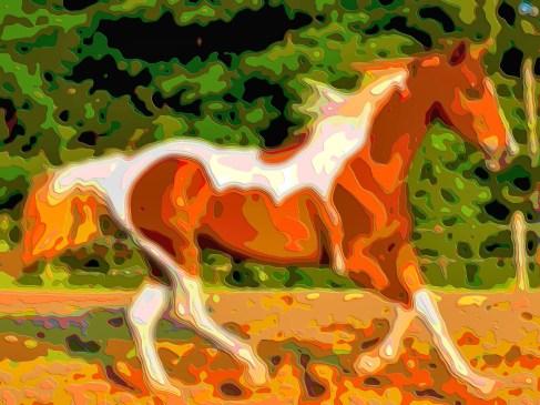 Animal Portrat Art Horse