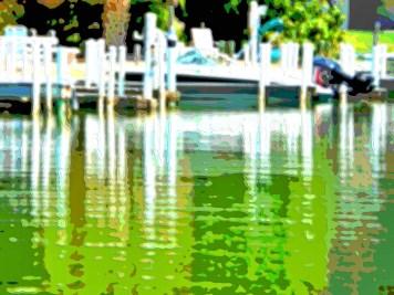 Florida Landscape Art