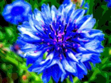 Flower Art Sale Blue Bachelors Button Basket