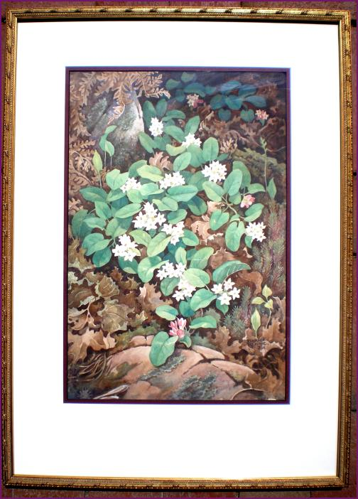 John Barrie Rennie Nicotiana Fine Art And Antiques