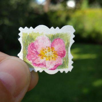 Iowa Wild Prairie Rose State Flower