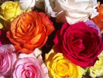 Bouqs Roses Close up