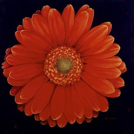 "Absi Grace, ""Daisy""  Sold"
