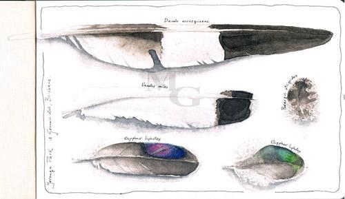 bird feathers watercolor sketchbook