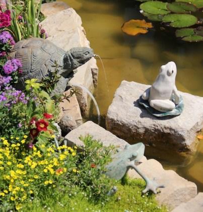 garden frogs turtles