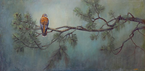 American kestrel, oil painting, lori mcnee, bird art