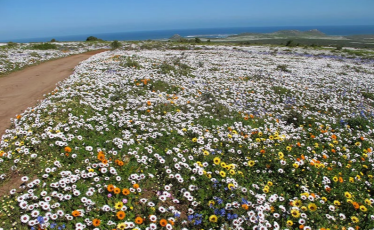 South Africa wildflowers