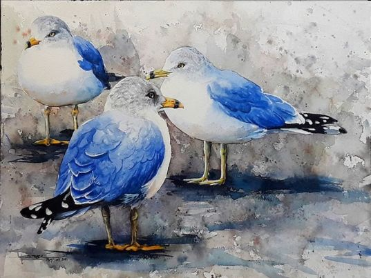 beautiful seagulls painting with watercolor