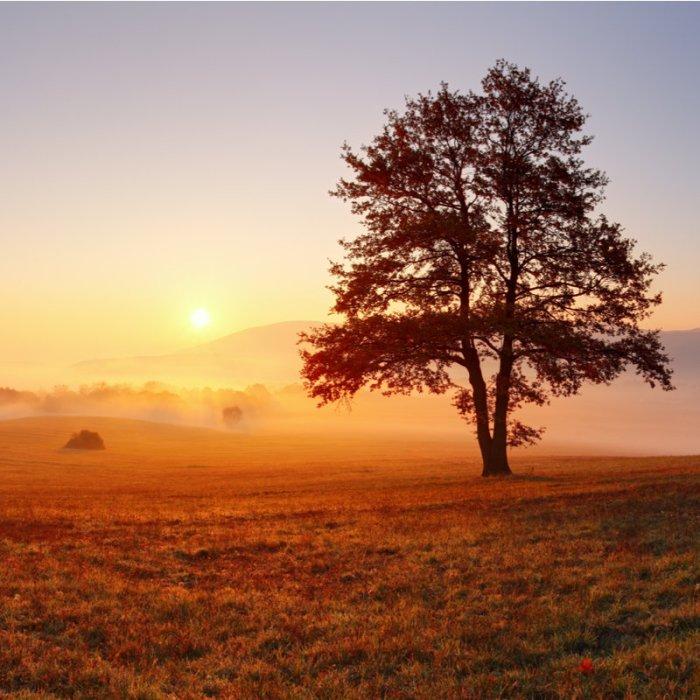 Alone tree in wide landscape