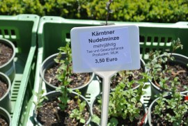 Kaerntner_Nudelminze_Adamah(C)LisaVockenhuber