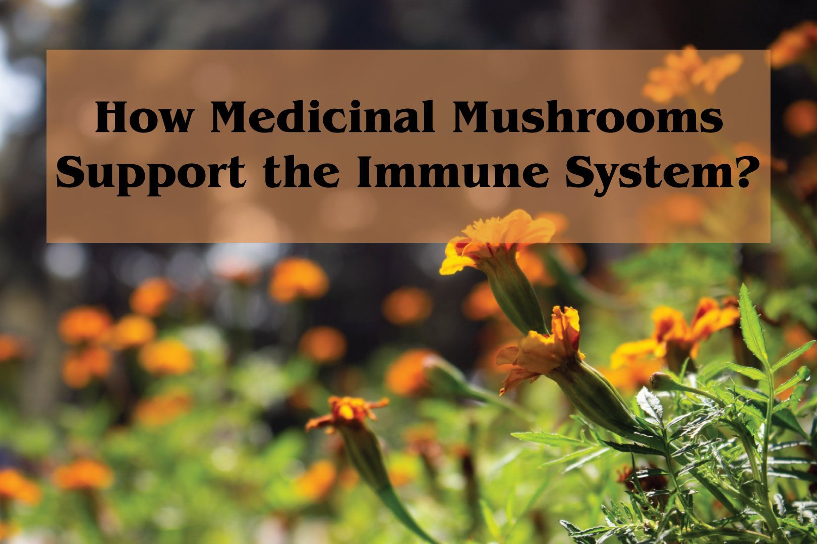 How-Do-Mushrooms-Support-the-Immune-System