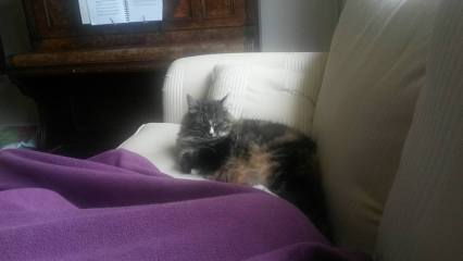 Mimie the Cat loves to nap on the sofa