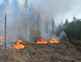 Finns love a good forest fire…