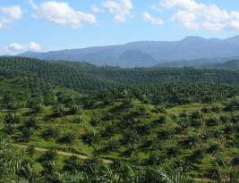 Swiss Political Fire over Palm Oil
