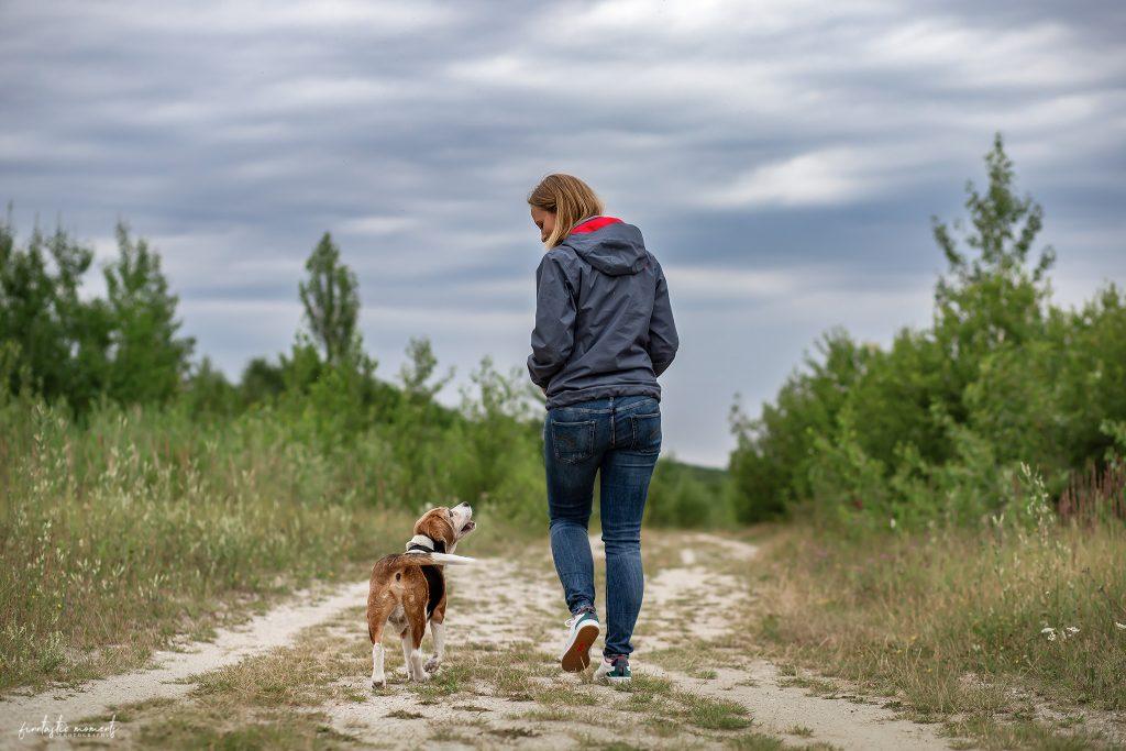 Beagle und Besitzerin laufen einen Weg entlang