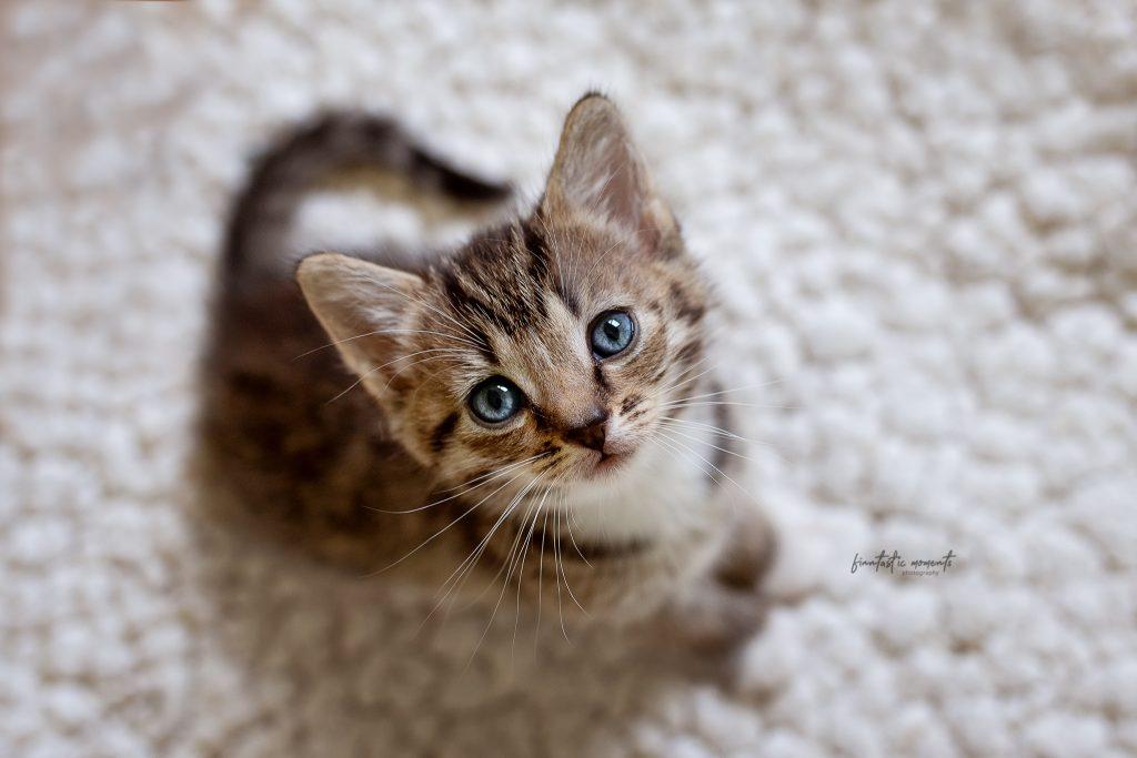 Katze von oben