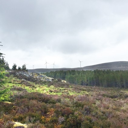 Previous view of Northern area of site looking Northeast prior to tree felling.
