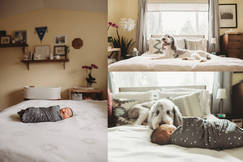 sheepadoodle and newborn baby boy