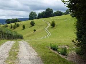 hillside near Westbury, Shropshire