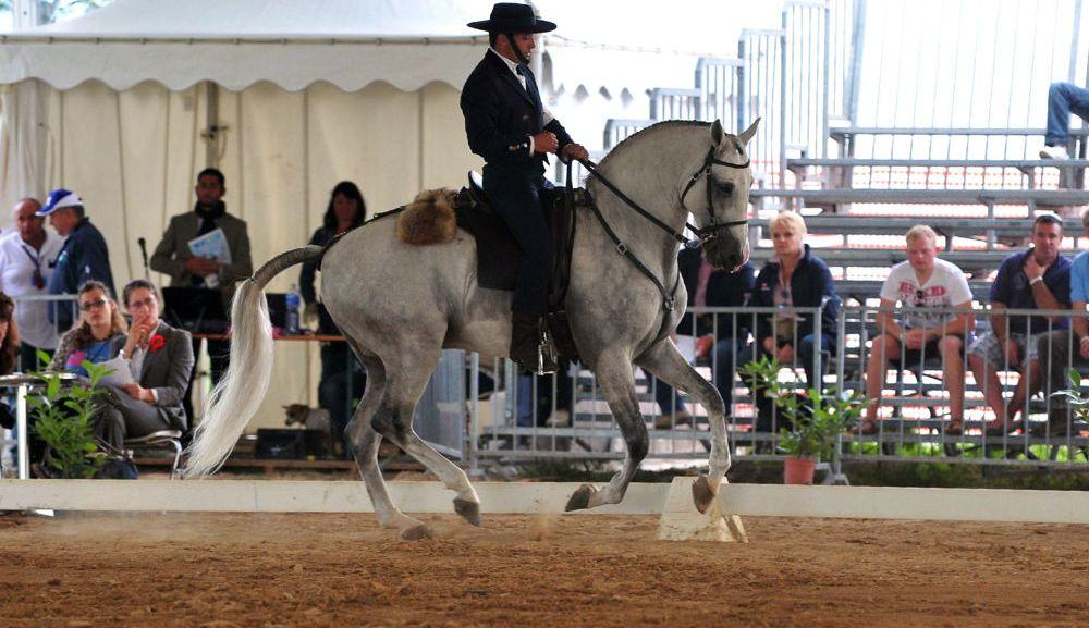 cavalli a roma 2 1