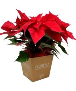 flower box con stella natalizia