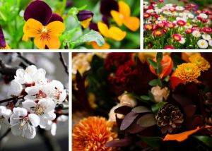 Fiori di 4 stagioni diverse