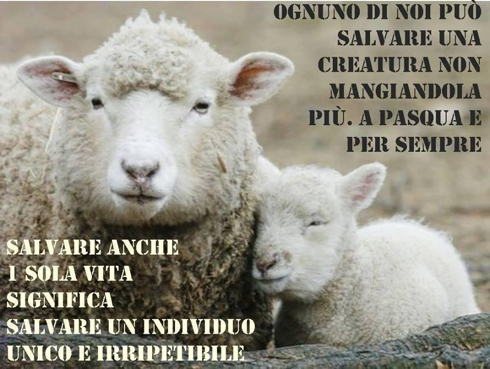 Risultati immagini per non mangiate agnelli per pasqua