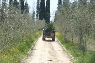 Trasporto limoni con trattore