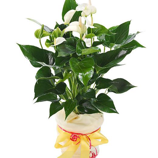 Blumenstrauß Verschicken Einfach Blumen Online Bestellen