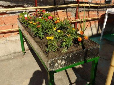 Paraisópolis inicia projeto que pode levar horta orgânica para 18.000 lajes