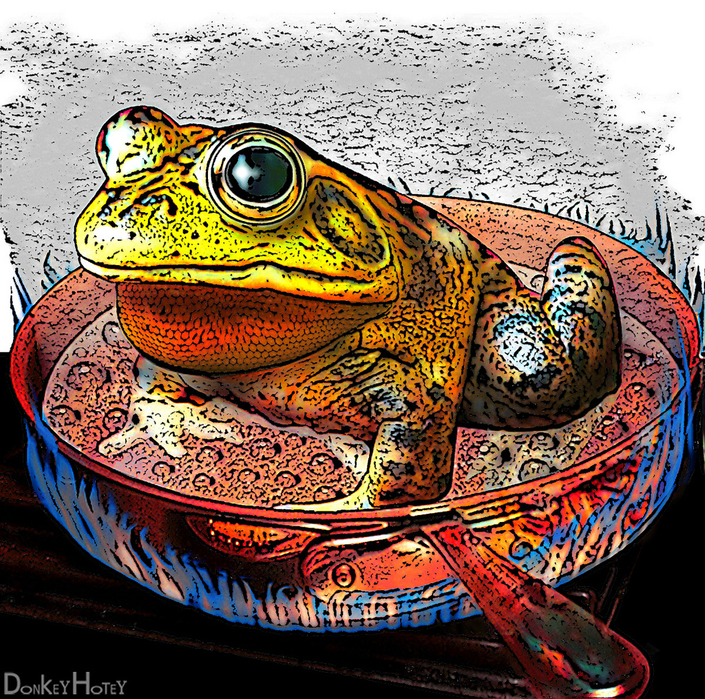 A mellow frog waiting for something to happen in a hot frying pan.