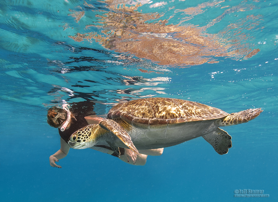 Caribbean Sea Creatures: Busting The Turtle Jinx: Photographing Caribbean Sea