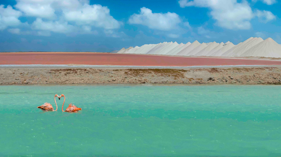 Photography in Bonaire:  More than just a Diver's Paradise