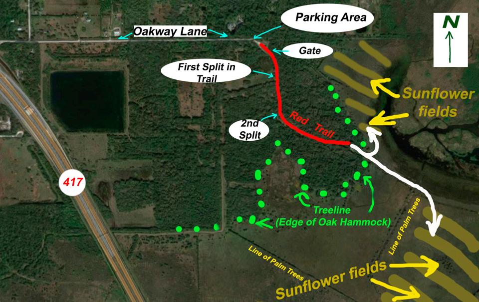 Lake Jesup Florida Wildflowers