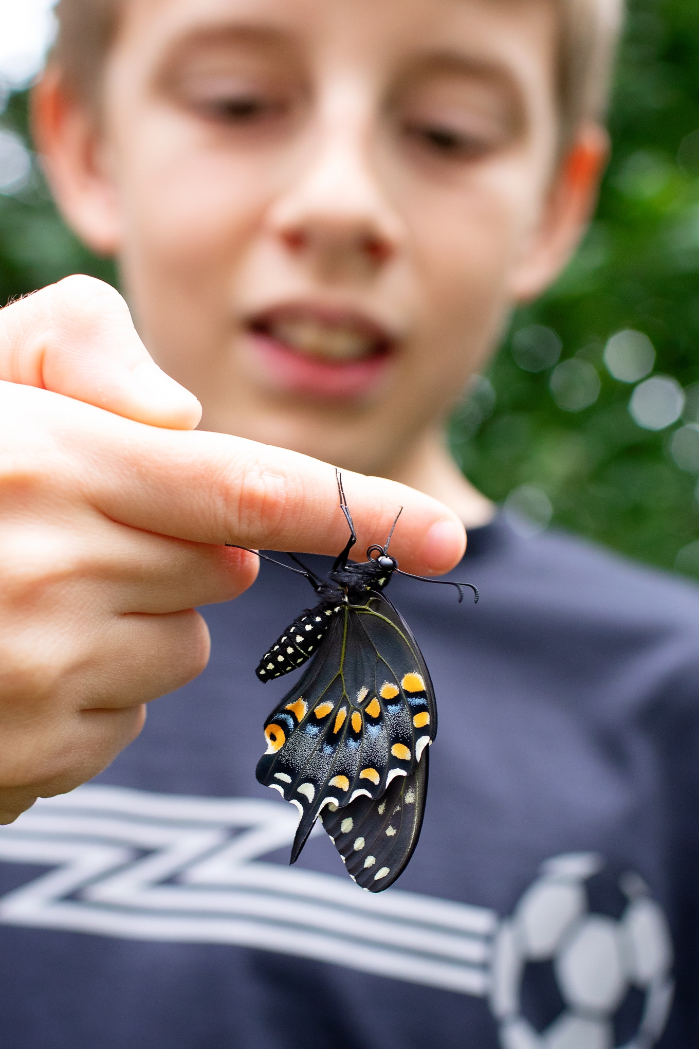 Boy Holding Adult Black Swallowtail Butterfly