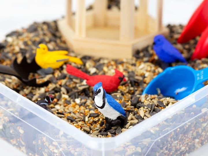 Bird Sensory Bin