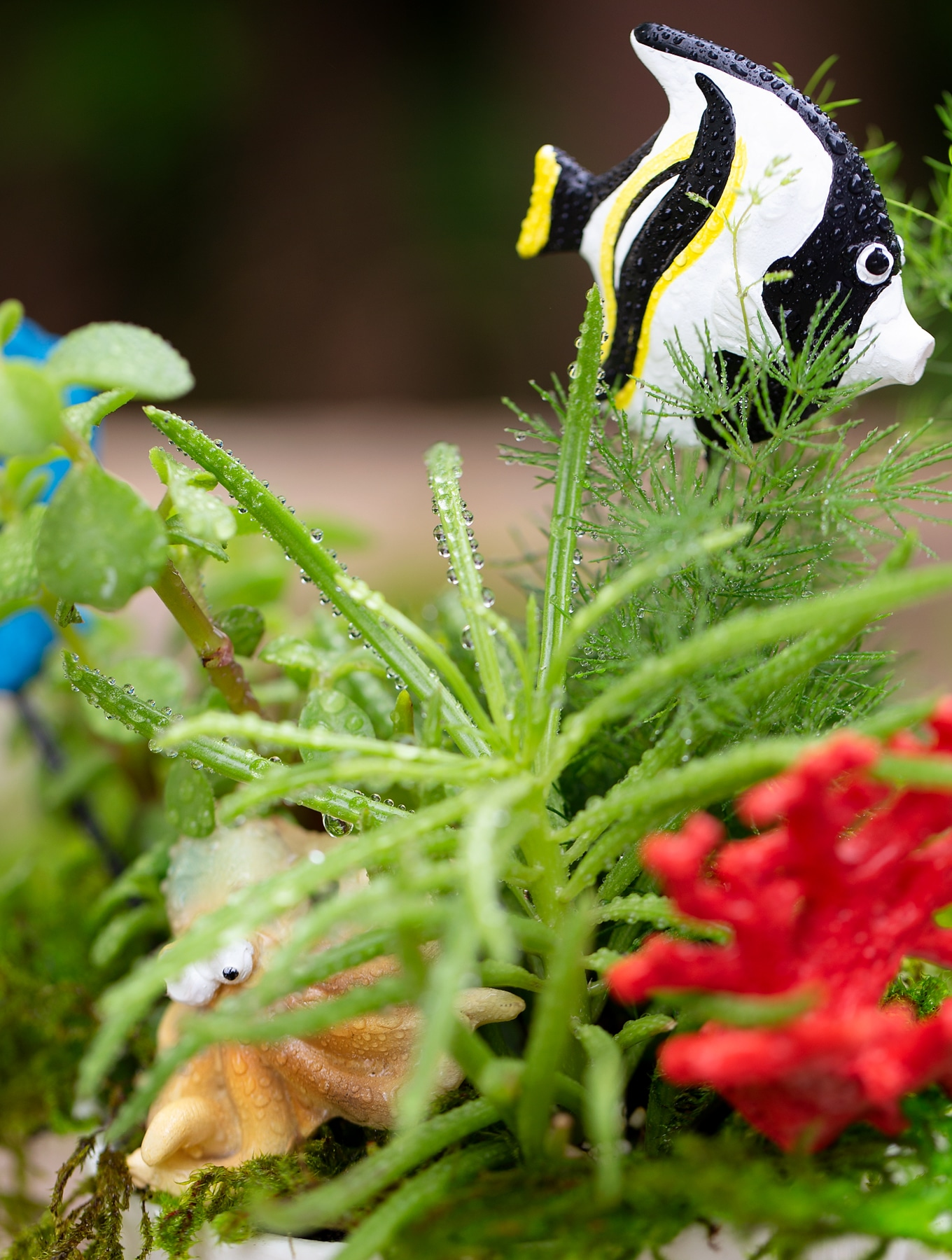 Freshly Watered Teacup Garden with Black and White Fish
