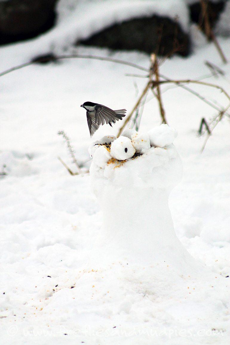 Make a snow sculpture winter bird feeder! | Fireflies and Mud Pies
