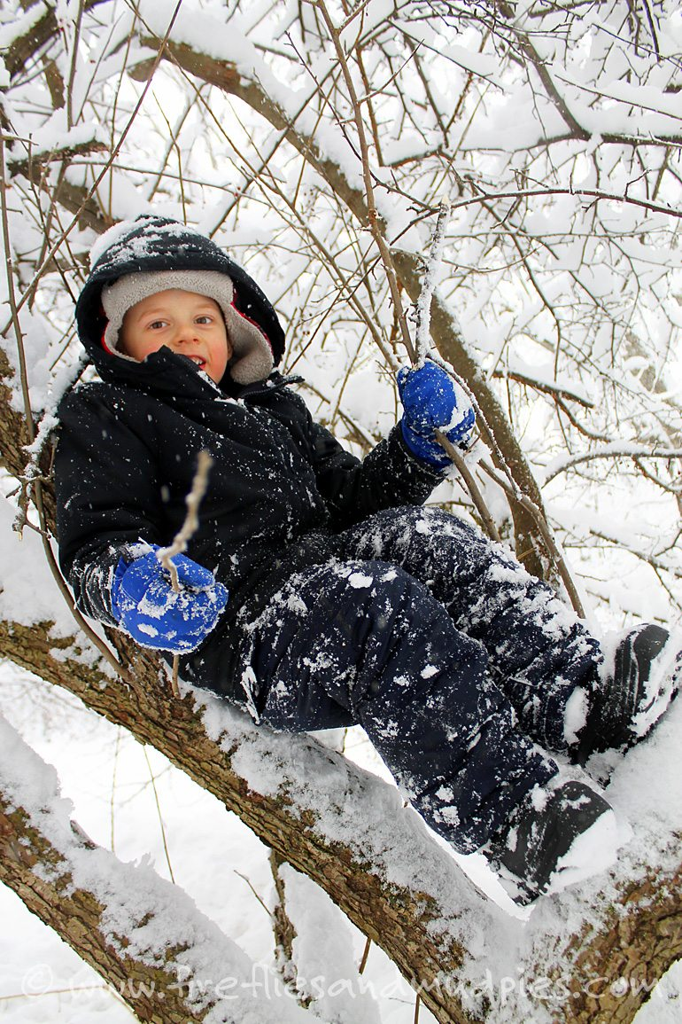 It's fun to climb trees in winter! | Fireflies and Mud Pies