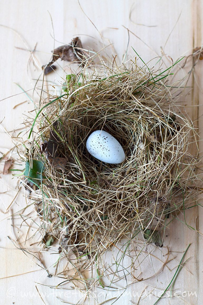 Painted Speckled Egg in Nest | Fireflies and Mud Pie