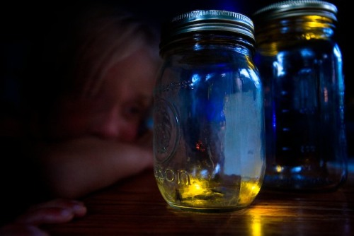 Image result for fireflies pictures