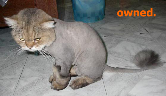 https://i1.wp.com/www.firekite.com/store/misc/pics/owned/owned-cat_shaved.jpg