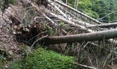 Alberi caduti in Toscana a causa del maltempo