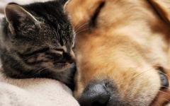 In treno con cani e gatti senza pagare: ecco come si può fare