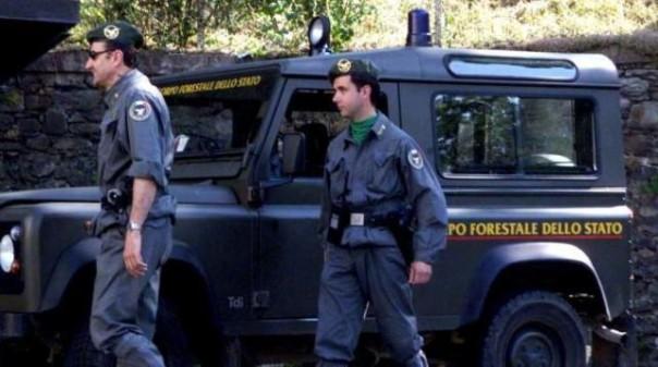 Sequestri e perquisizioni del Corpo Forestale dello Stato
