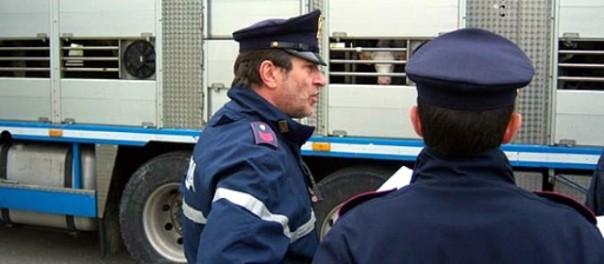 I controlli della Polstrada sul trasporto di animali
