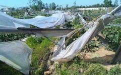Maltempo, Toscana: serre, stalle e vigneti spaccati dal vento. Agricoltura in ginocchio. Danni per milioni di euro