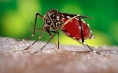 Sanità: caso di dengue a Montelupo, disinfestazione