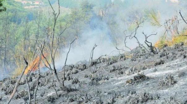 La macchia mediterranea bruciata a Montenero, Livorno